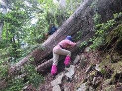 岩場あり、倒木ありの登山道