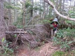 鬼怒沼山への倒木がある荒れた登山道