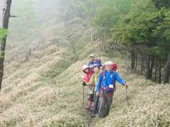 熊笹の登山道