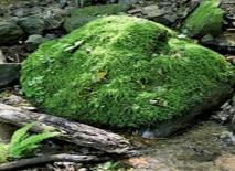 苔むした岩が綺麗