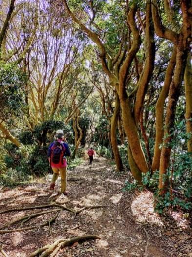 自然林に囲まれた気持ち良い尾根歩き