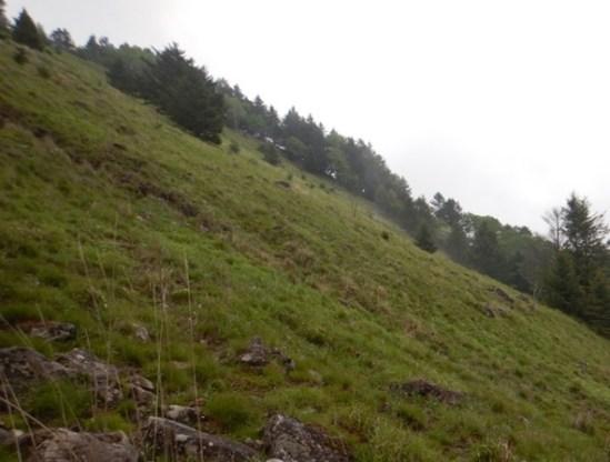 唐松尾根の樹林が途切れると雷岩は近い