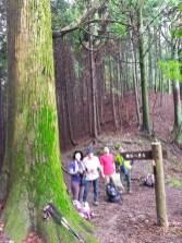 杉の峠の大杉