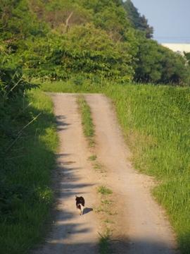 北海道の猫ども