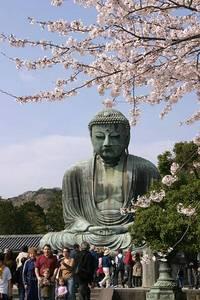 鎌倉・江ノ島のネコ 前編