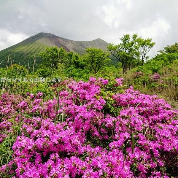 ミヤマキリシマ 中岳
