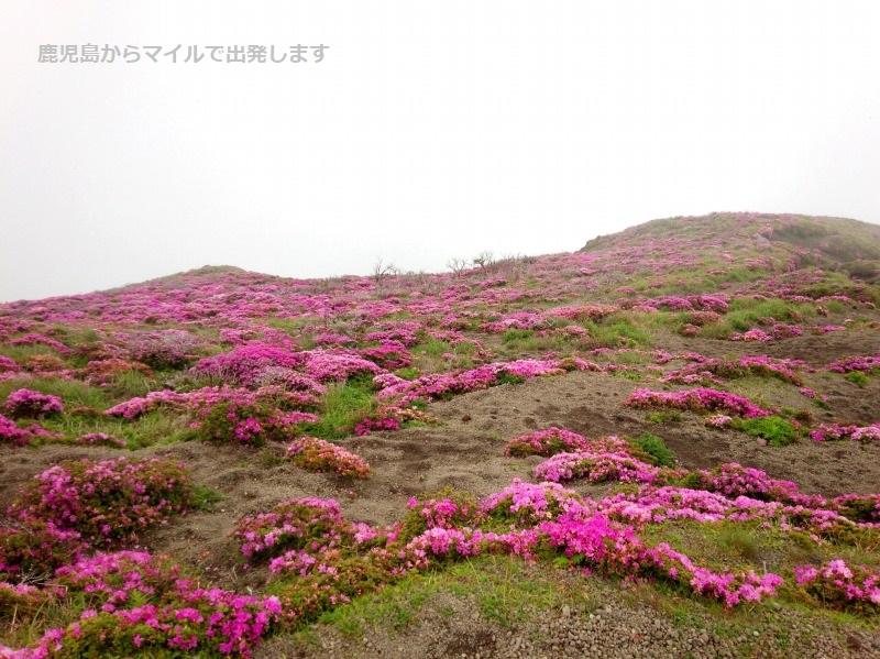 ミヤマキリシマ 高千穂峰