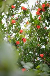 民家に咲き乱れる花
