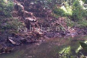 Limbah kotoran sapi yang dibuang di sungai Kelurahan Penanae. Foto: Bin