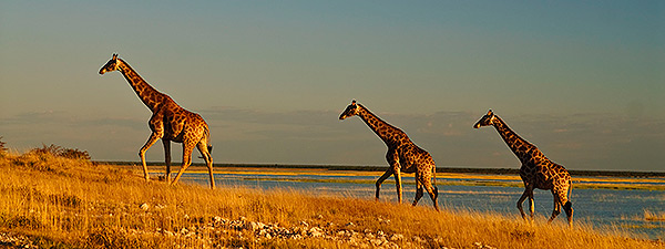 Live Vortrag Namibia, Botswana