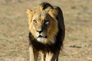 vortrag-tiere-afrikas-02