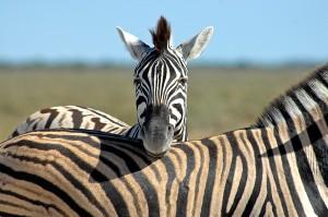 vortrag-tiere-afrikas-06