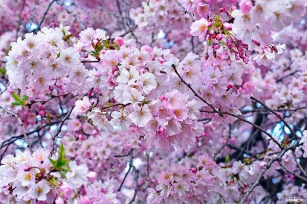 Красивая весна (60 фото)