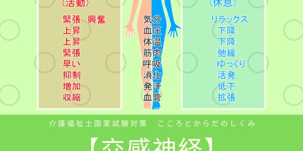 交感神経・副交感神経・自律神経