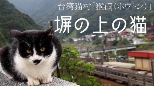 塀の上の猫100匹がお出迎え~台湾の猫村猴硐(ホウトン)訪問記~