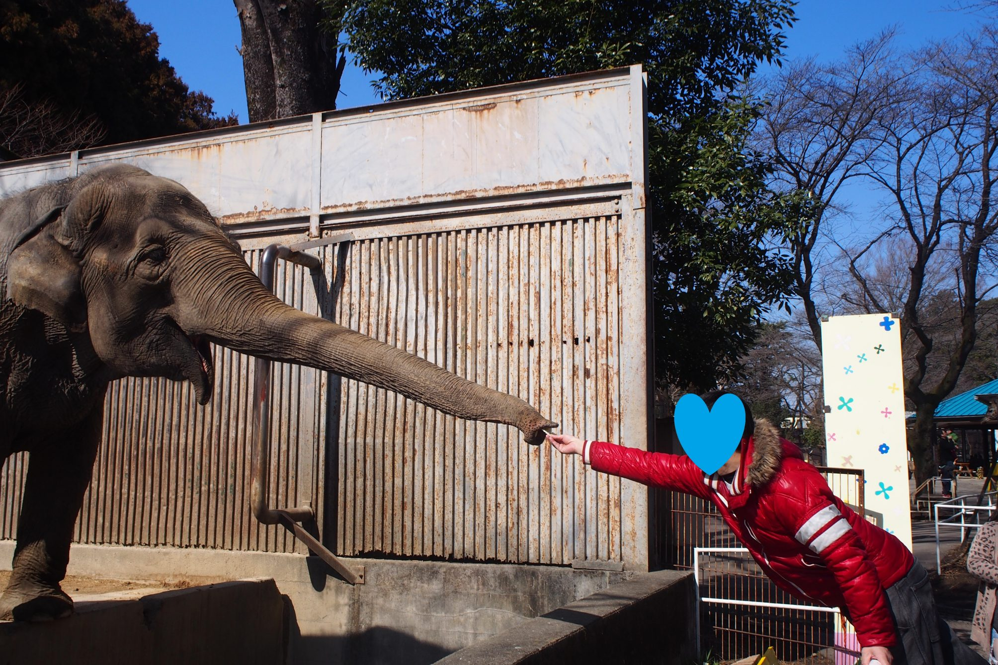 宇都宮動物園ゾウえさやり