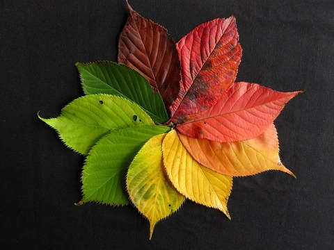 autumn-leaves-1486075_640
