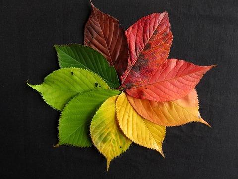 autumn-leaves-1486075_640