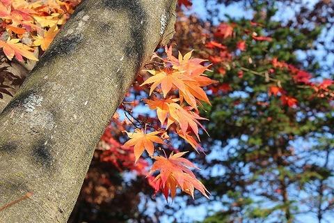 Fall in 2011 003