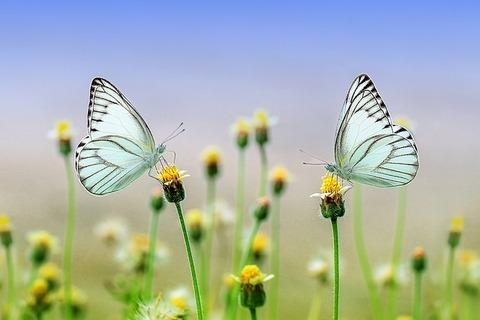 butterfly-1127666_640