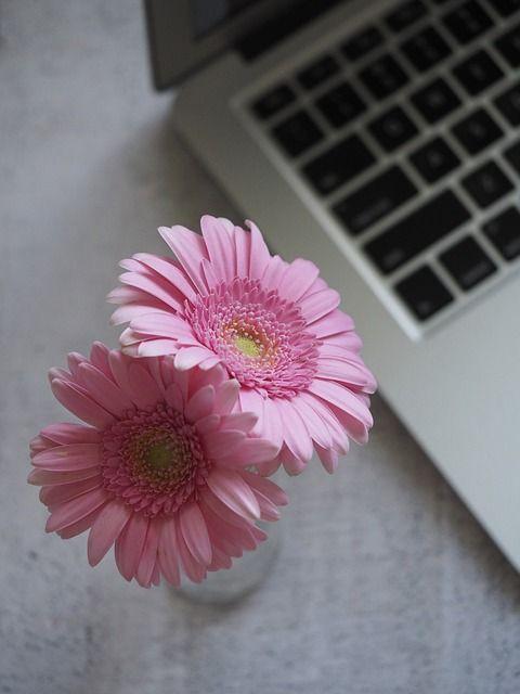 flower-3121972_640
