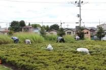 草刈作業_06_50%