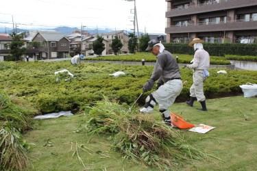 草刈作業_11_50%
