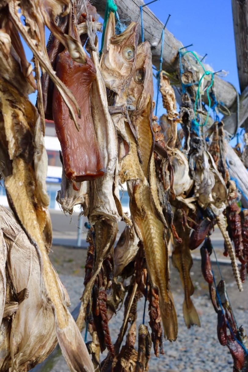 Wind dried fish Hvammstangi Iceland