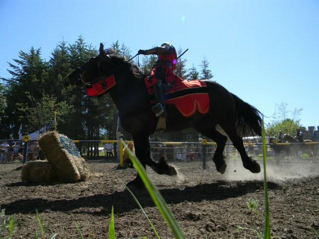 horse-75850_1920.jpg