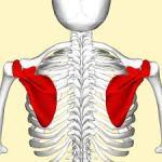 急な肩の痛みが出現した患者さんの1症例