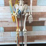 背骨のズレと坐骨神経痛の関係性