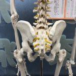 骨盤矯正の効果は持続するのか??【持続する為の対策方法】