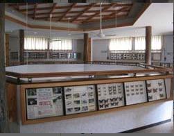 蝶のミニ博物館あり