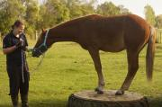 Teresa Nairn (Committee): Having been through the Pony Club system, Teresa has