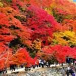 秋といえば行事やイベント、記念日や花などネタの種を紹介!