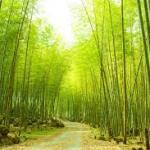 竹の成長の速度やスピードはどのくらい?成長の仕方がすごい!