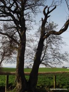 Laddertree.