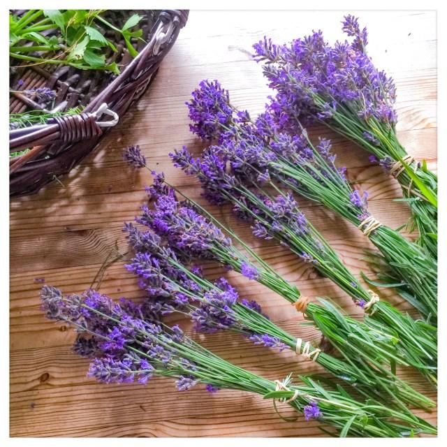 Lavendel og lokale fødevarerr