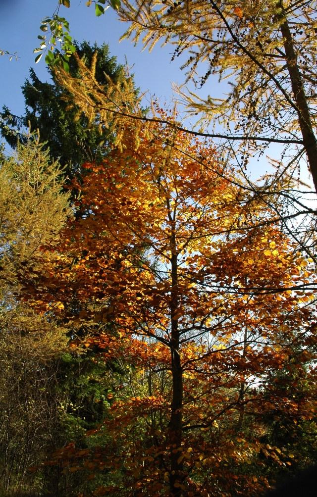 Efterårsfarver På Mols