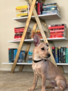 benny the puppy in front of a bookcase