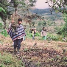 La toma política de la ayahuasca