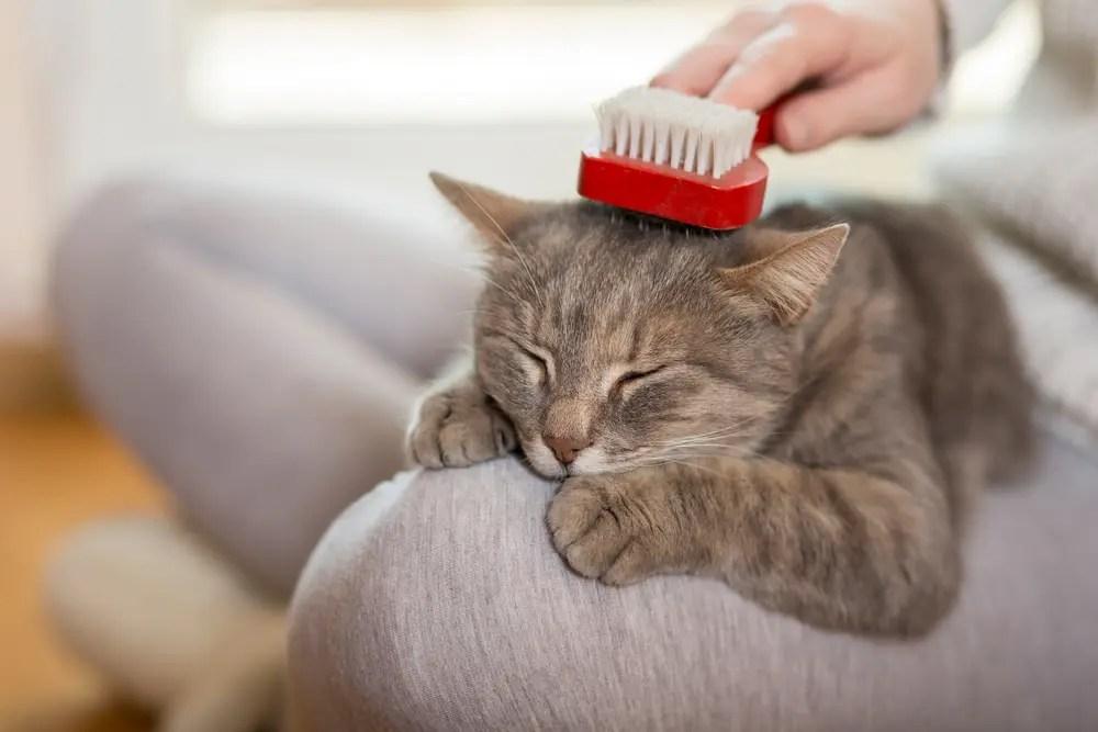 猫の毛をブラッシングする女性