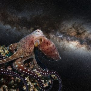Octopus in Space