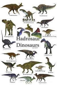 many pictures of hadrosaur types
