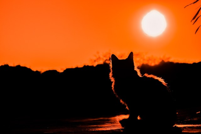 sunset-3008779_1280