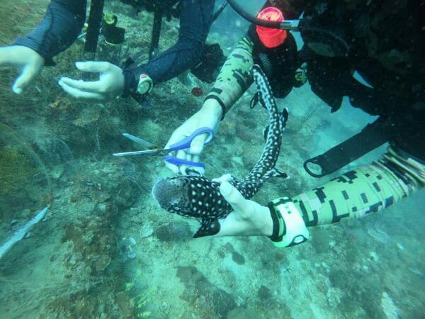 A diver rescuing a trapped bamboo shark