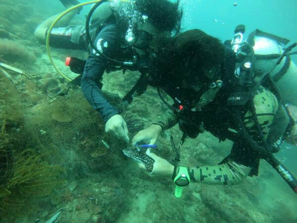 Gayana Marine Resort Dive & Recreation team cutting lose a bamboo shark from under a ghost net