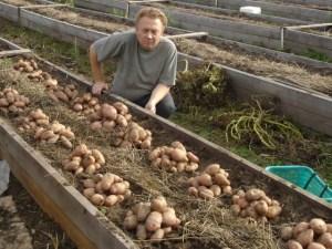 Как правильно удобрять картофель?