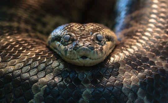 Het serpent