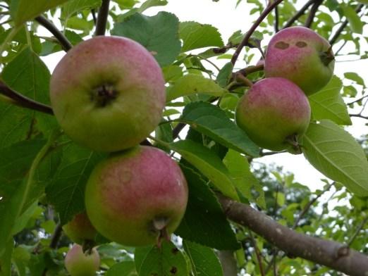 Onder de appelboom